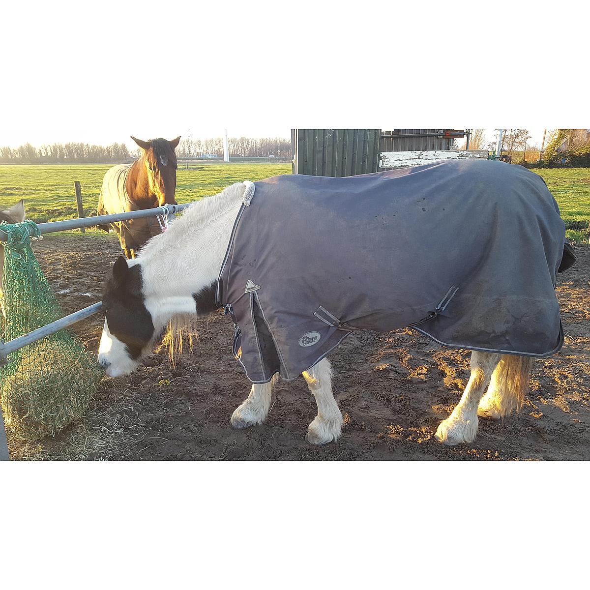 Harrys Horse Decke Thor 0gr Ebony Tc Futter Ebenholz