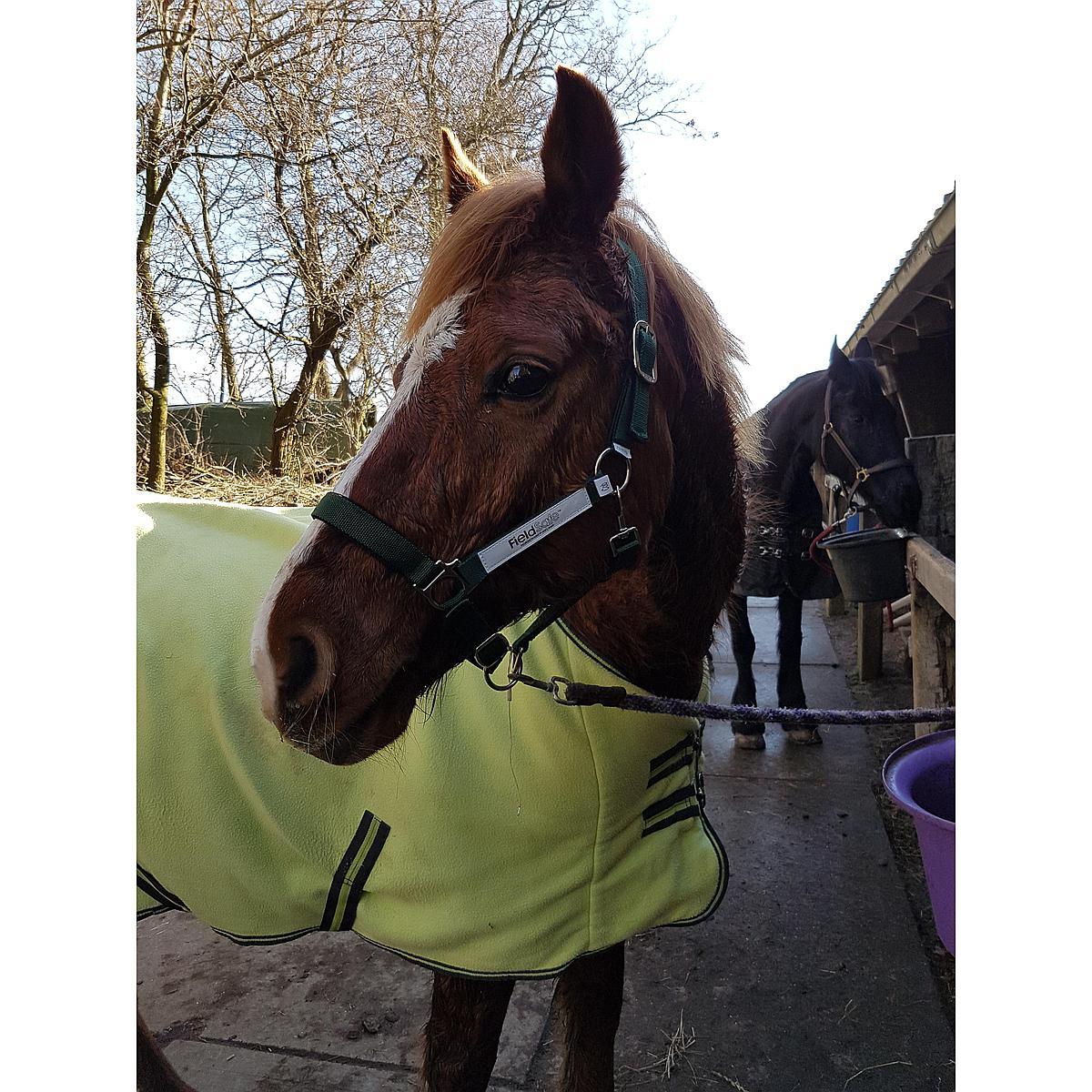 Horseware Halfter Grün
