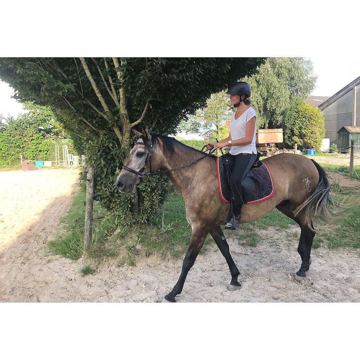 Harrys Horse Trense, gebisslos, Schwarz