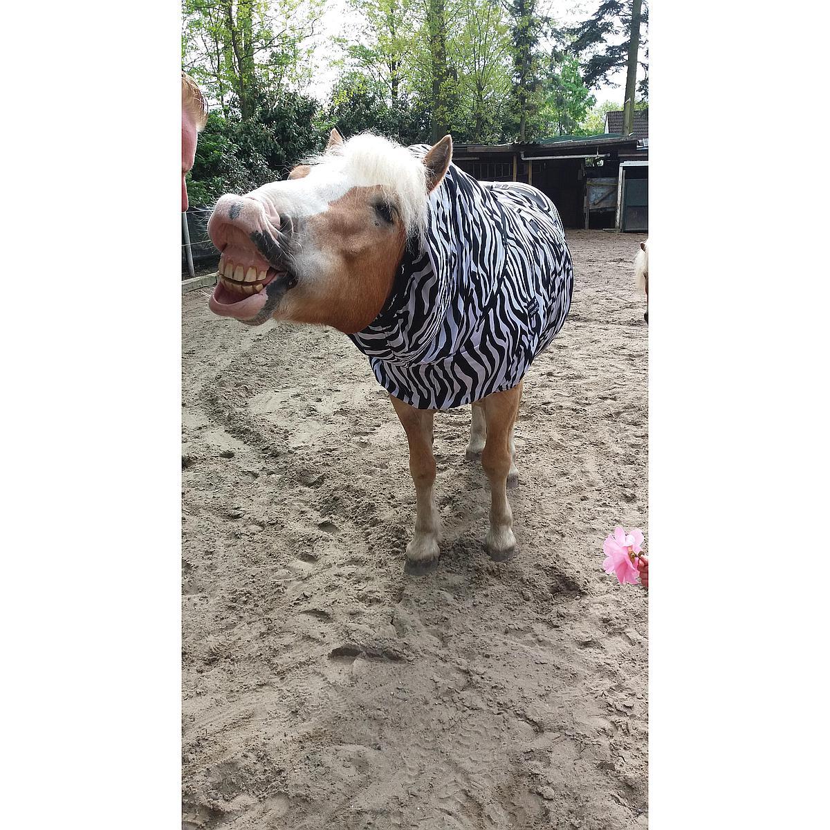 Hkm Eczeem Deken Zebra Wit/Zwart