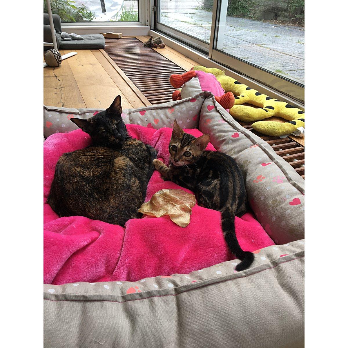 Lief! Hondenmand Girls Beige/Roze 60x50cm