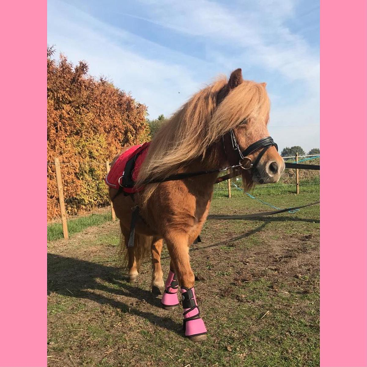 Horka Springschoen Jolly Pink