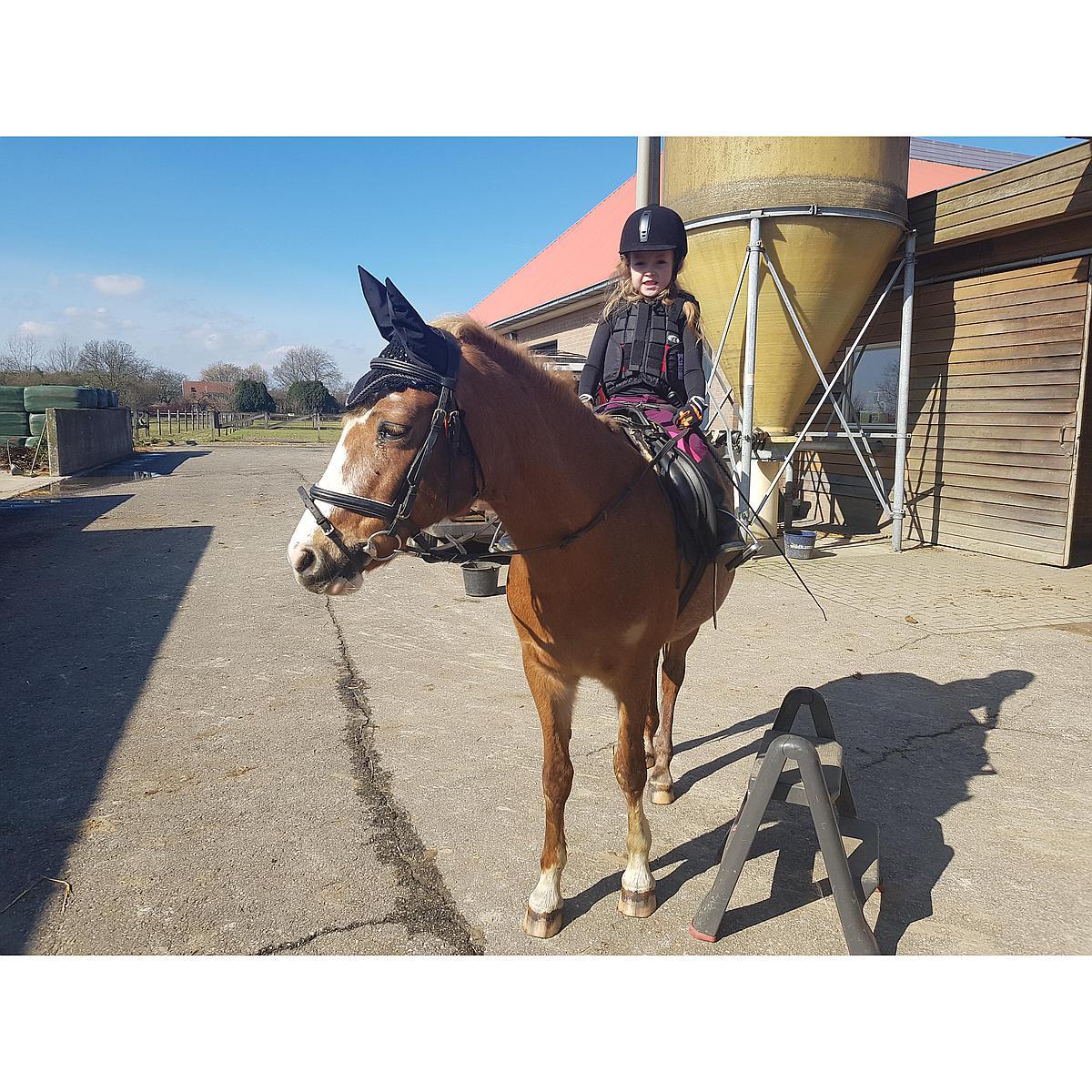 Harrys Horse Vliegennetje met Oren Zwart
