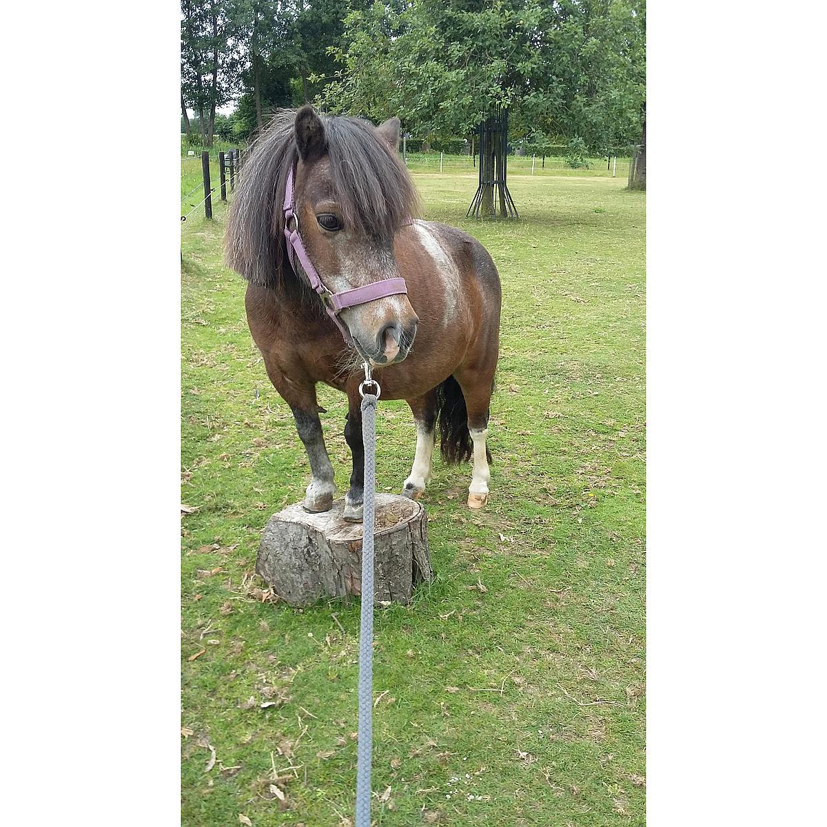 Harrys Horse Halfterset Initial Violett