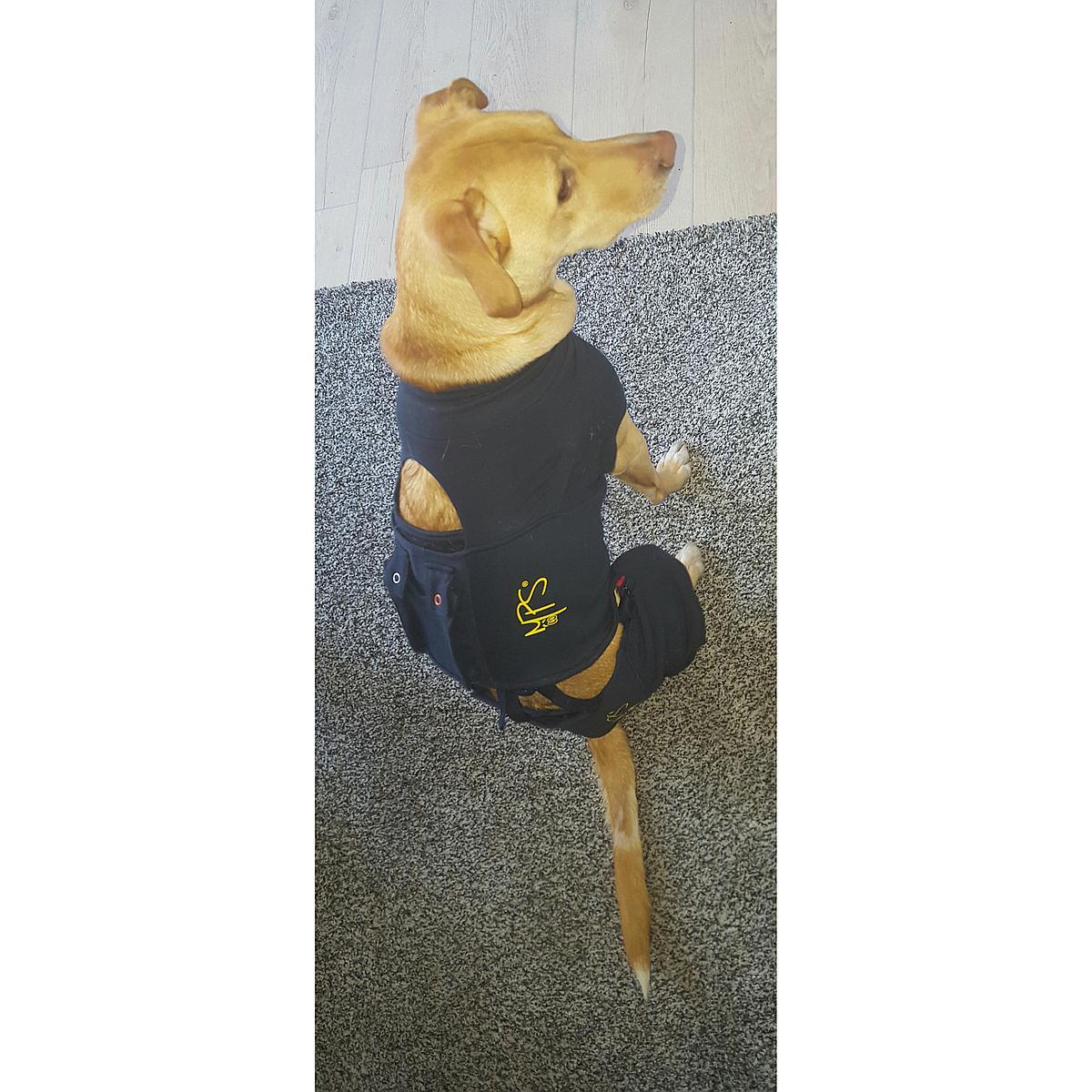 Medical Pet Shirt HLS Achterpootmouwtjes Hond Blauw