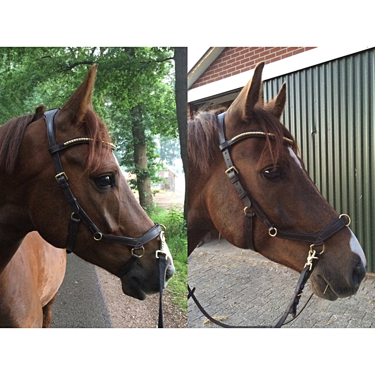 Rambo Micklem Multi Bridle Brown Full