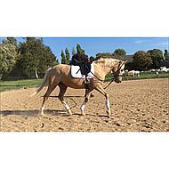 Harrys Horse Chambon Élastique Noir