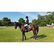Harrys Horse Zadelonderlegger Merinowol Naturel Full