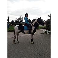 BR Strijklappen Event m/neopreen voering Sunset Orange Pony