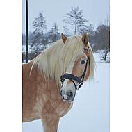 Harrys Horse Bride Cousu Marron Cob