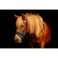 Harrys Horse Hoofdstel Rondgenaaid Bruin Cob