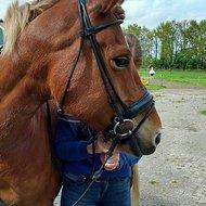 Harrys Horse Trense Luxe rundgenäht Schwarz Full