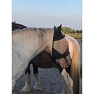 Chetaime FlyMask avec Oreilles et Nez Amovible Pony