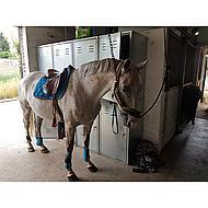 BR Strijklappen Event Pu met Neopreen Voering Wit Pony