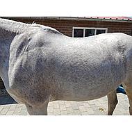 Rapide White Horse Shampoo 500ml