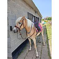 BR Hoofdstel Adlington Zwart Pony