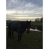 Harrys Horse Couvre-Cou Thor 200gr 600D Ébène XL