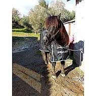 Harrys Horse Couverture Imperméable Thor 0gr Fleece Lining Noir 145/195