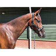Harrys Horse Nasenschutz Nose Net Universal Schwarz One Size
