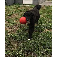 Jolly Ball Speelbal Rood 6