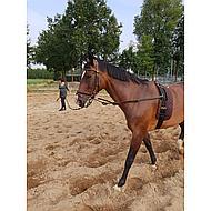 Harrys Horse Tapis pour Surfaix Marron
