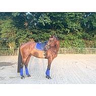 Harrys Horse Bandages Élastique avec Fleece Rouge 4 Pièce