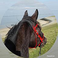 Harrys Horse Bustrens Dubbel Gebroken 13,5cm