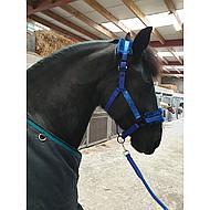 Harrys Horse Mounty Longe en t/éflon 200 cm