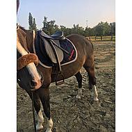 Harrys Horse Beugels Compositi Profile Bruin Volwassen