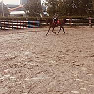 Harrys Horse Beugels Aluminium Zwart 11cm