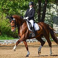 Harrys Horse Veiligheidscap Challenge Sparkle Zwart L-XL