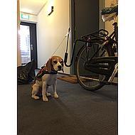 Tijssen Springer Fietsbeugel Hond