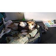Kerbl Harnas Pulsive Hond Bruin 36-50cm, 46-60cm