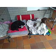 Kerbl Honden Stretcher 4-seizoenen Beige 105x68cm