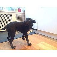 Kerbl Hondenschoen Active Zwart/Grijs XS