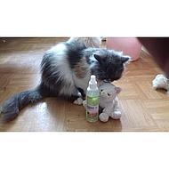 Kerbl Play Spray Catnip voor Kat 175ml