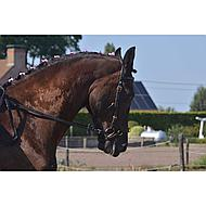 Imperial Riding Show-Bows Zakje Crystal Black 20st