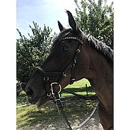 Rambo Micklem Deluxe Competition Bridle Black Cob