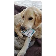 MilbactorOntwormingstablet Hond >5kg 48tabl