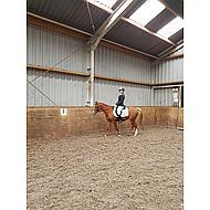 Red Horse Rijbroek Junior Julia Elastico Zwart 128