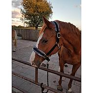 Harrys Horse Halster Touch Zwart Pony