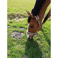 Harrys Horse Halster Touch Cognac Pony