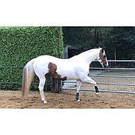 Harrys Horse Peesbeschermers Next Navy Pony