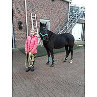 Harrys Horse Peesbeschermers Next Turquoise Cob