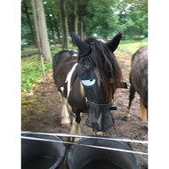 Pfiff Vliegenmasker met Motief Zwart/Grijs Pony