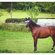 Pfiff Vliegenmasker met Motief Zwart Pony