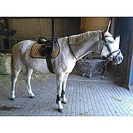 Pfiff GP Saddle Cloth Basic Line Brown Shetty