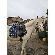 Pfiff Halter Padded Synth. Blue Beige Pony