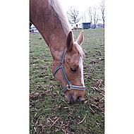 Pfiff Kunststof Halster Turquoise Beige Onderlegd Pony