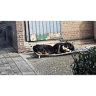 4Legs Dogzone Grün 56x76cm